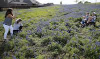 Sarah McCarroll, of Prosper, Texas (far left) and her mother Penny Skaggs, of Celina, Texas (second from left) photograph McCarroll's daughters Kamryn McCarroll, 2, Kyleigh McCarroll, 7, and Kynleigh McCarroll, 9, in a field of bluebonnets near Zion cemetery in Frisco, Texas on Monday, April 15, 2019.(Vernon Bryant/Staff Photographer)