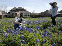 Penny Skaggs of Celina photographs her granddaughter, 2-year-old Kamryn McCarroll of Prosper, on April 15 in a patch of bluebonnets near Zion Cemetery in Frisco.(Vernon Bryant/Staff Photographer)