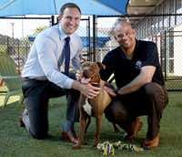 Ed Jamison (right),  director of Dallas Animal Services, and Ryan Rogers, assistant DAS director, with shelter dog Roger in one of the shelter's outdoor play yards Thursday.(Rose Baca/Staff Photographer)