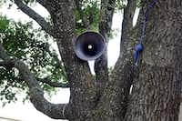 """A speaker nestled in a tree is part of the """"First Amendment Machine"""" at Mountain View College, which runs through May 10.(Lawrence Jenkins/Special Contributor)"""