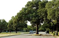 Trees and parks along with meandering roadways and sidewalks define the 'idiot's hill' (Oakland Hills) neighborhood in northeast Denton.(Al Key/Denton Record Chronicle)