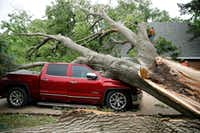 A red oak that fell as a tornado passed through Denton on April 30 crushed a pickup and punctured a hole in the roof of the house and a bedroom ceiling, letting rain pour in.(Vernon Bryant/Staff Photographer)