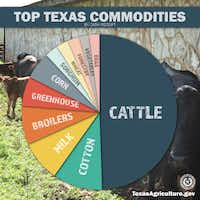 Agricultural sales in Texas average about $20 billion annually, with cattle making up $10.5 billion of that.(Texas Department of Agriculture.)