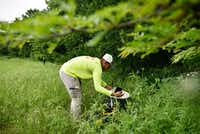 Erin Plaisance, assistant director of operations with Municipal Mosquito, sets a BG Sentinel trap near a secluded grassy area in The Colony.(Ben Torres/Special contributor)