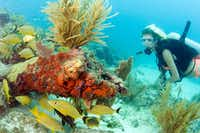 The Florida Keys offer world-class scuba diving and the only contiguous coral barrier reef in North America.(Bob Care/Florida Keys News Bureau)