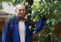 """Louniutaha """"Niu"""" Siale, 79, tends to a pear tree in his garden at his Euless home.(Rose Baca/Staff Photographer)"""
