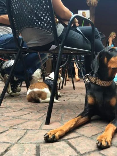 bce868dcb45 Dog About Town: A fun run, bar hopping and more things to do | Pets ...
