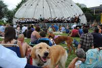 The Dallas Symphony Orchestra's annual Memorial Day concert is pooch-friendly.(2013 File Photo)