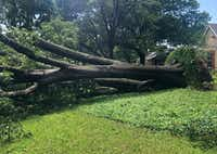 A large tree, brought down by high winds, sits on Willow Ridge Road near Midway and Forest in the North Dallas area as a severe storm passed through Dallas on Sunday afternoon, June 9, 2019.(Erin Booke/Staff)