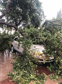 "<p><span style=""font-size: 1em; background-color: transparent;"">A downed tree branch sits on a car Sunday, June 9, 2019, outside Lowkey Poke Joint, where owner Sam Handa and chef Jose Araujo lifted a tree off a car after it had fallen on during Sunday's storms so a woman could escape. (Photo by Sam Handa)</span></p>"