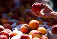 """People choose peaches during the Parker County Peach Festival in downtown Weatherford.(2017 File Photo/<p><span style=""""font-size: 1em; background-color: transparent;"""">Ashley Landis</span></p>)"""