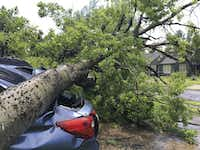 A tree from one property smashed a car in a neighbor's driveway when it fell in a severe storm in Old East Dallas on June 9. (Michael Hamtil/Staff Photographer)