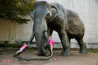 <p>Children climb the tusks of an elephant statue outside the Dallas Museum of Natural History during the State Fair of Texas.&nbsp;Gerry Mandel, a lifelong Dallasite who grew up exploring the museum, asked Curious Texas whether it's still open to the public.</p>(2017 File Photo/Staff)