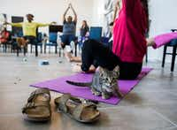 A kitten sits on a yoga mat next to Anna Hurst during a kitten yoga class hosted by Attiva Central Park and Prairie Paws on Thursday, June 20, 2019 at Attiva Central Park in Grand Prairie.(Ashley Landis/Staff Photographer)