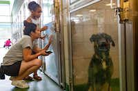 Irene Quinones and her daughter Jada look at dogs available for adoption at Dallas Animal Services on Westmoreland Road Thursday.(Lynda M. Gonzalez/Staff Photographer)