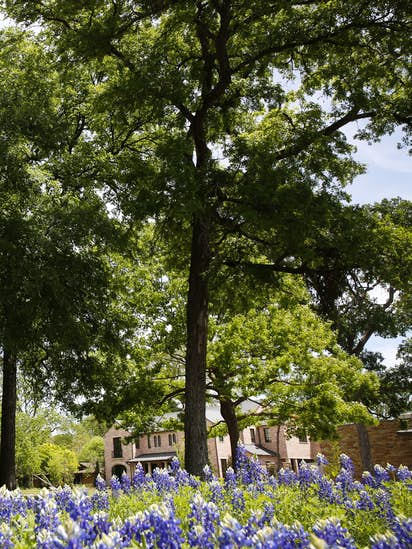 More trees can help Dallas keep its cool, now that forestry plan has