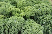 'Prizm' kale gets a thumbs-up for area gardens from the Dallas Arboretum.(Dallas Arboretum)