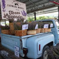 The Dallas Farmers Market was singling out and celebrating lavender growers last weekend, which filled the shed with a heady aroma.(Kim Pierce)