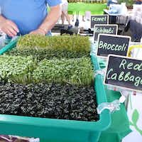 At the microgreens table at the Dallas Farmers Market, the little sprouts are well labeled   plus a sandwich board tells which varieties are available.(Kim Pierce)