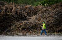 <p>A worker added a log to a large pile of debris collected after recent storms at a temporary collection site near the intersection of Highway 75 and Interstate 635 in Dallas on June 21. Recent storms caused an unusually large amount of tree damage.</p>(Ashley Landis/Staff Photographer)