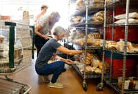 """<p><span style=""""font-size: 1em; background-color: transparent;"""">From front: Volunteers Janet Bowen of Frisco, Judy Pedersen of Frisco and Keegan Kasprowicz of The Colony sorted donated food at Frisco Family Services Food Pantry on Thursday, July 11, 2019.</span><br></p>(Vernon Bryant/Staff Photographer)"""