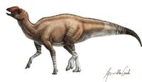 An artist's depiction shows what the Aquilarhinus palimentus might have looked like. Researchers recently identified the new species of dinosaur based on fossils found decades ago in Big Bend National Park.(ICRA Art)