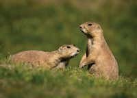 Kids are sure to enjoy Lubbocks' Prairie Dog Town, which pays homage to the little rodent that's a mainstay of the Great Plains.(Visit Lubbock)