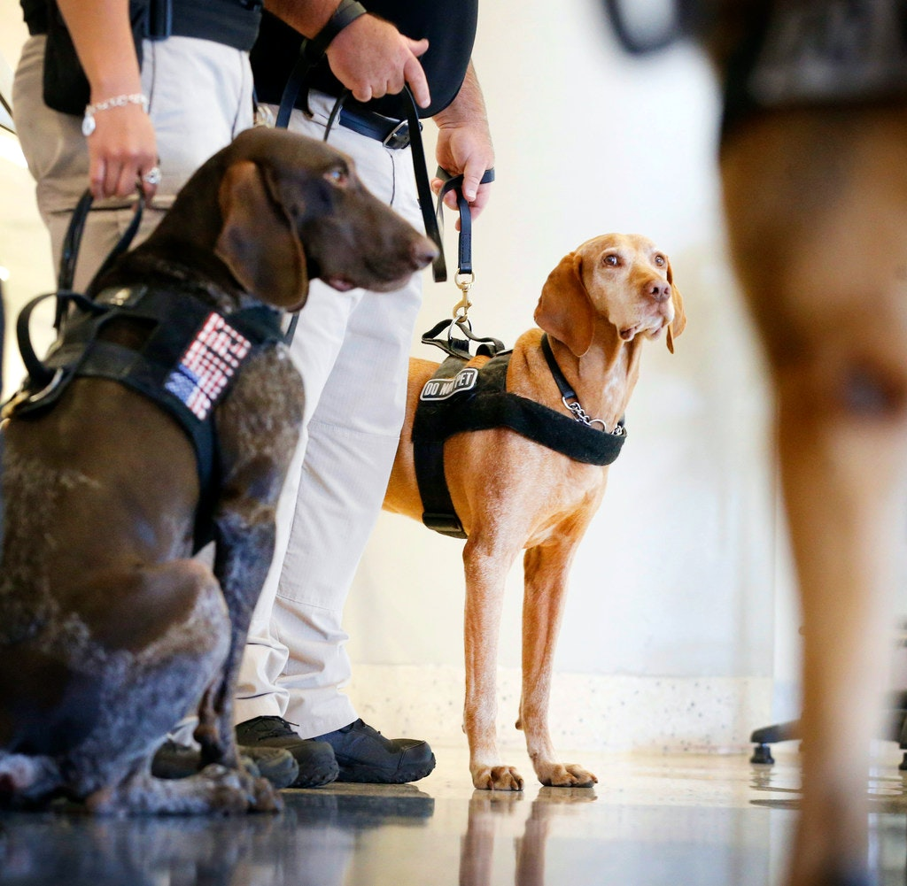 Image result for Meet two very good boys sniffing explosives at DFW Airport and keeping fliers safe from bad guys