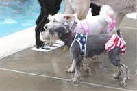 Doggie Splash Day at Vanston Pool in Mesquite includes a swimsuit contest.(2011 File Photo)