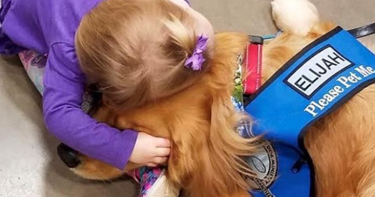 Comfort dogs from North Texas soothe shooting survivors, caregivers in El Paso...