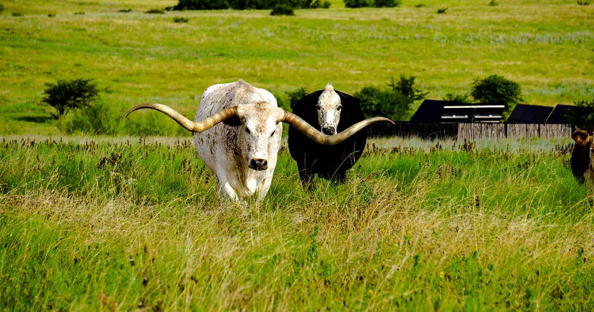 Ranch west of Fort Worth is set for auction...