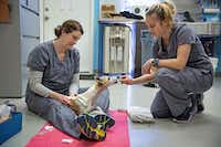 Dr. Brittney Barton (left) and Amanda Sircy work with Nikki, a 16-year-old whippet, during her acupuncture treatment, part of her recovery from surgery to repair a herniated disk.(G.J. McCarthy -  Staff Photographer )