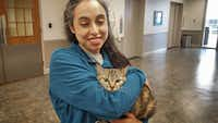 Noura Jammal of the Richardson Animal Shelter holds Uma, a two-year-old cat up for adoption.