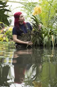 Horticulturalist Ellie Biondi arranges orchids for the exhibition.Oli Scarff  -  Getty Images