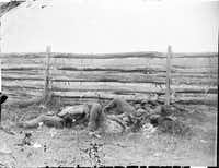 Dead of Stonewall Jackson's Brigade lie by rail fence on the Hagerstown pike at Antietam, Maryland, September 1862.
