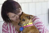 Meagan Lee, 16, adopted Kiyoko, a Chihuahua, during the Clear the Shelter event at Prairie Paws Adoption Center in Grand Prairie, Texas on Saturday, Aug. 15, 2015. The event was created to increase the rate of pet adoptions. (Lawrence E. Jenkins/Special Contributor)