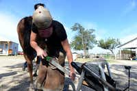 Farrier Madeline Miner files the hooves of a rescue horse at Becky's Hope Horse Rescue in Frisco.( Rose Baca  -  neighborsgo staff photographer )
