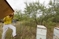 Brandon Pollard moved a box to cover a bee hive before spraying planned near the border of Balch Springs.