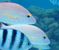 Fish swim close enough to touch when you're walking on the bottom of the ocean.Beverly Burmeier - Special Contributor