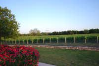 Located at the junction of the state's most acclaimed wine grape regions on Texas Highway 16 in Comanche, Brennan Vineyards is a picturesque escape into Texas history.