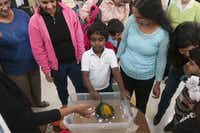 Ronald Larson, 6, demonstrates his science project on how some objects float while other don't during the Children's Garden Montessori Academy Pre-K Science Fair on Saturday, Feb. 21, 2015.   (Rex C. Curry/Special Contributor)(Rex C. Curry - Special Contributor)