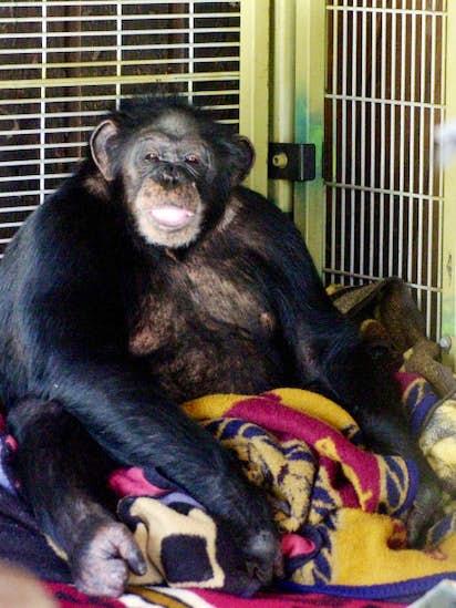 Chimpanzee attack victim gets face transplant in Boston