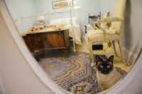 A cat enjoys its stay in a suite at East Lake Cat Care Center in Lake HighlandsPhotos by ROSE BACA