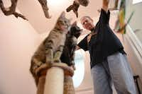 Volunteer Daryl Davis plays with two kittens up for adoption at the East Lake Cat Care Center in Lake Highlands. The feline-only facility, which had a soft opening in November, offers medical care seven days a week, lodging and pet adoptions.( ROSE BACA )