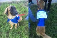 """Rescue dog Chewbacca wore a sign saying """"This could have been me!"""" at Saturday's event to memorialize dogs dumped dead and alive at Dowdy Ferry Road. (Sarah Mervosh/Staff Writer)"""
