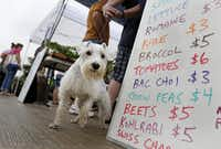 Many of the  markets are pet-friendly, as Chaz can attest.(Rose Baca - Staff Photographer)