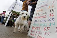 Many of the  markets are pet-friendly, as Chaz can attest.Rose Baca - Staff Photographer
