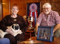 Dick and Patti Caldwell of Lavon pose with their pug, Spice, who won't be competing in the Westminster Kennel Club Dog Show because she may be pregnant. The Caldwells have two other dogs competing  this year, Cash, a pug and Jerry Lee, a golden retriever.