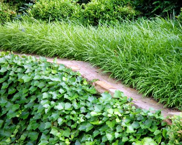Week 7 With Neil Sperry Ground Cover Basics Before You