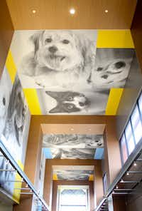 Photos of donor's pets paper the lobby